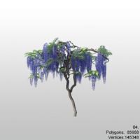 wisteria wysteria plant 3d model