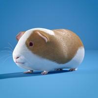 3d guinea pig