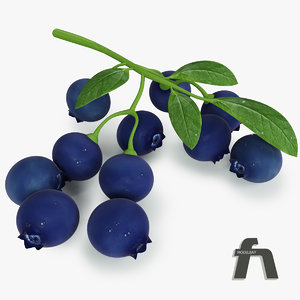 3d model blueberry fruit