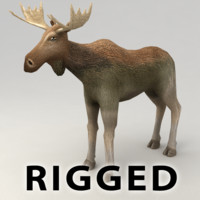 rigged moose 3d model