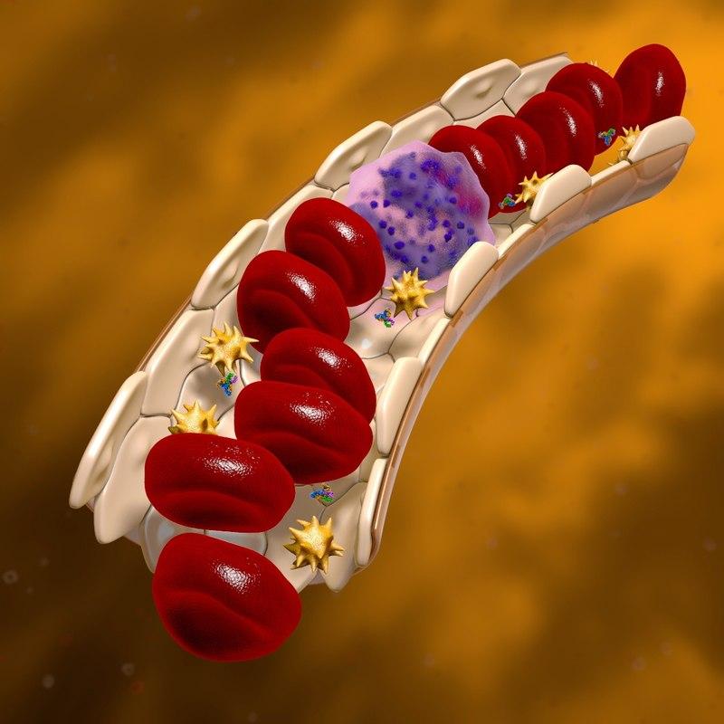 blood vessel cells 3d c4d