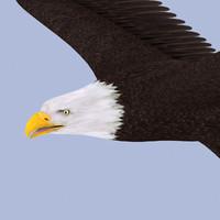 eagle bald 3d model