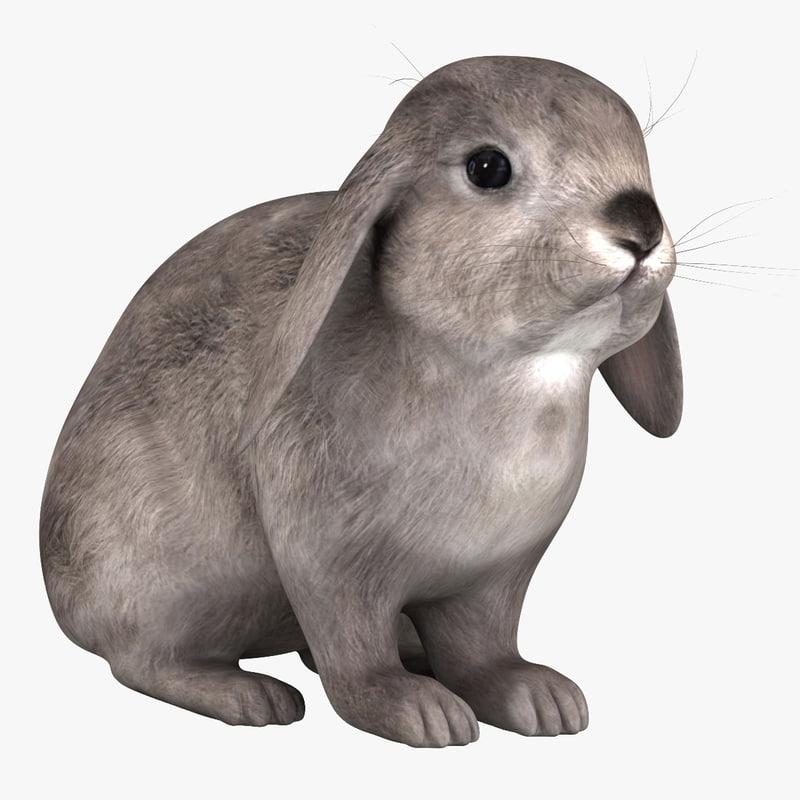 3d rabbit grey