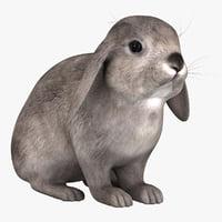 Rabbit Grey