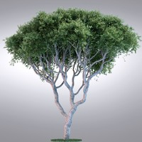 hi realistic series tree max