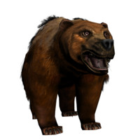 maya bear