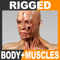 Rigged Human Male Body and Muscular System