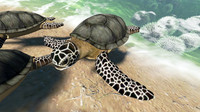 caretta sea turtle 3d model