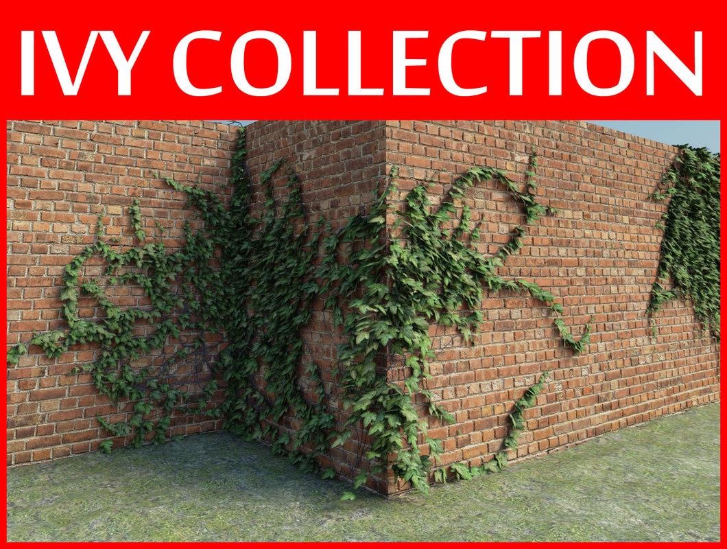 maya ivy plant