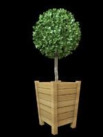 bush shrub topiary max