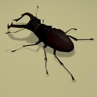 3d model bug