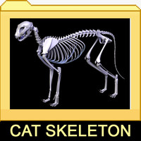 3d model cat skeleton