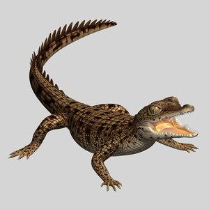 baby crocodile 3d model