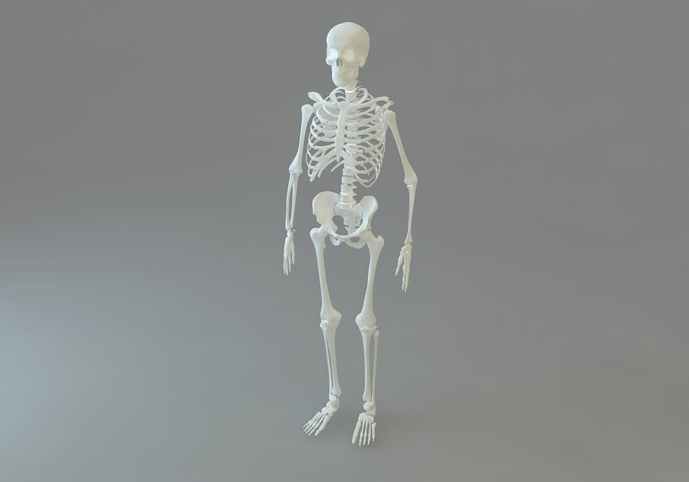 skeletal max