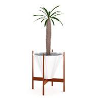 3d cactus plant