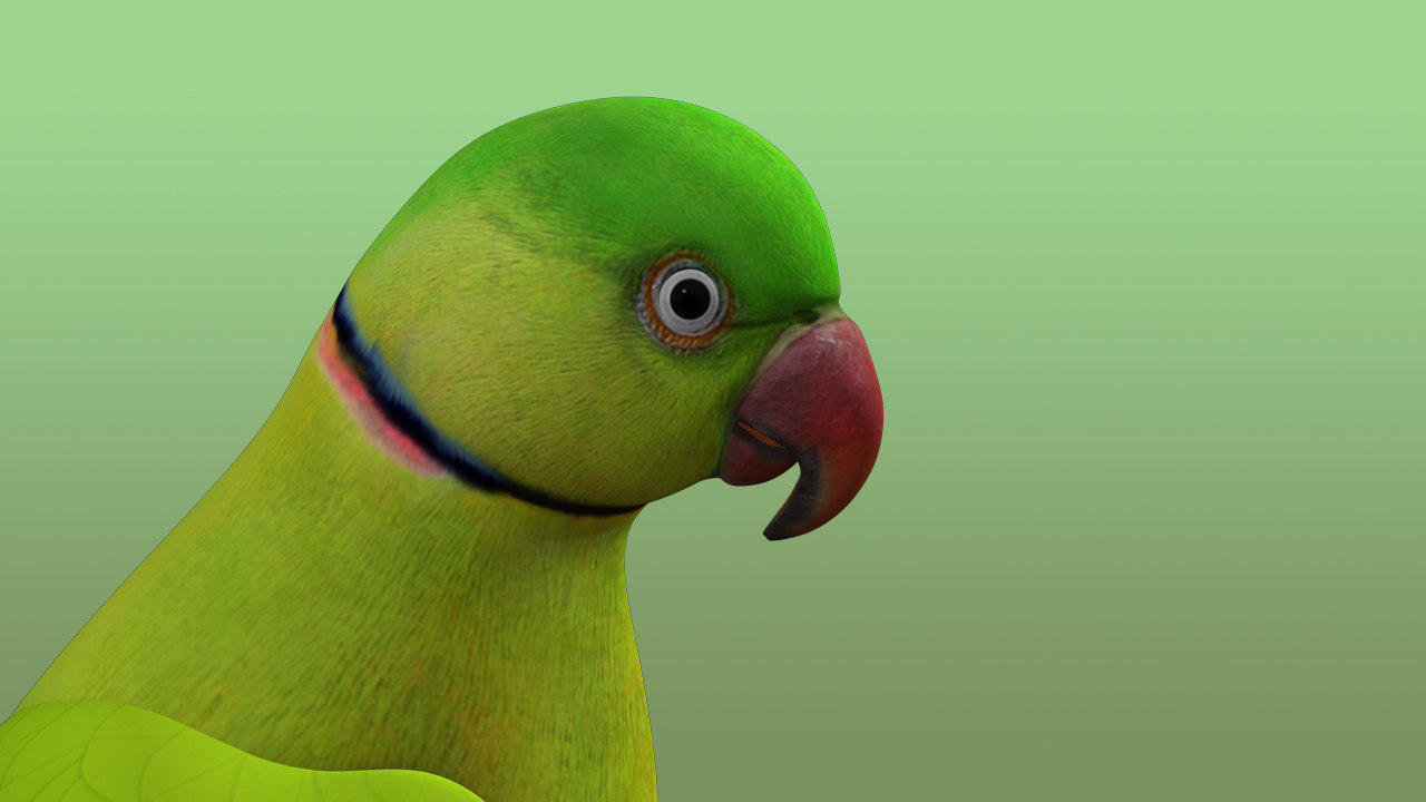 pet bird animal obj