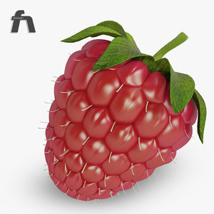 3d raspberry fruit model