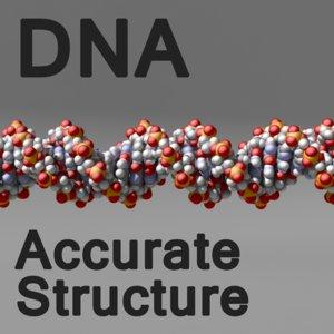 dna molecule 3d model