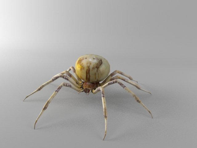 3d model orb spider shamrock