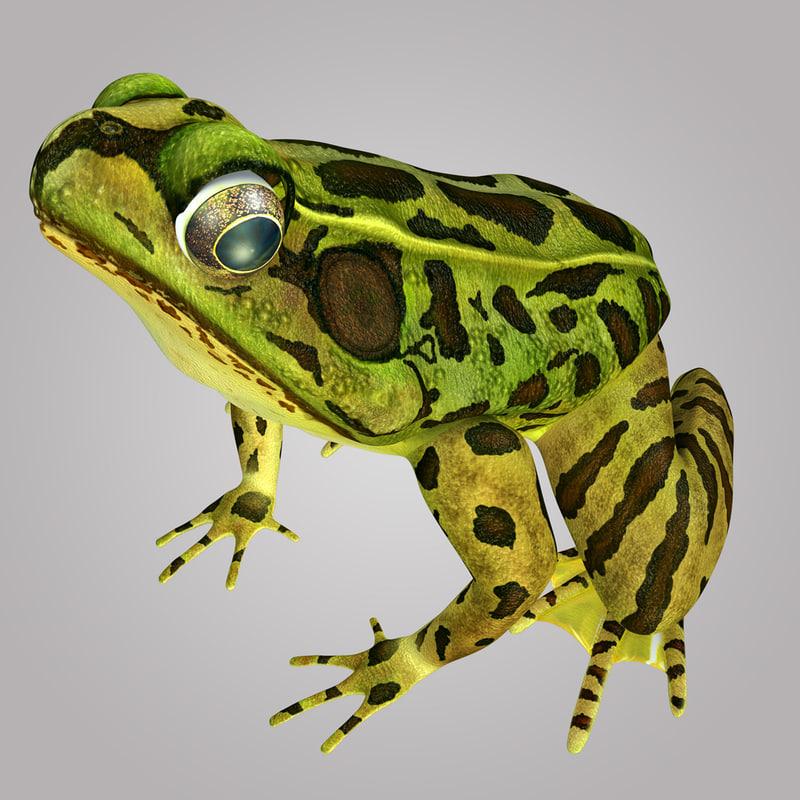 frog obj