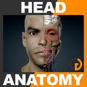 Human Male Head Anatomy