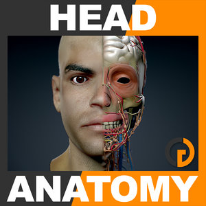 lightwave human male head anatomy