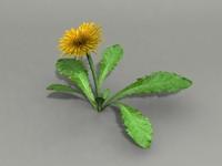 flower dandelion 3d max