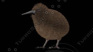 3d model kiwi birds apteryx