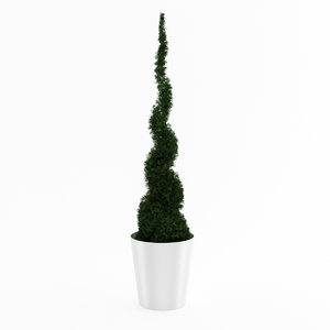 3d thuja potted