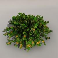 bunch colour flowers 3d model