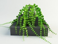 primulaceae lysimachia 3d model