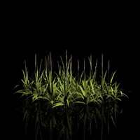 3d bunch grass