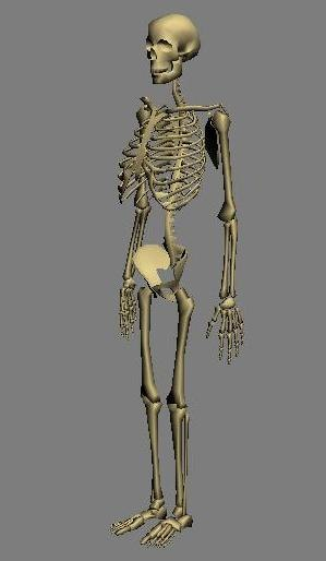 bone skeleton 3d 3ds