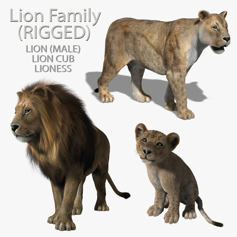 ma lions family rigged fur