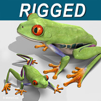 3d red-eyed tree frog model