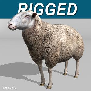 3d lamb sheep