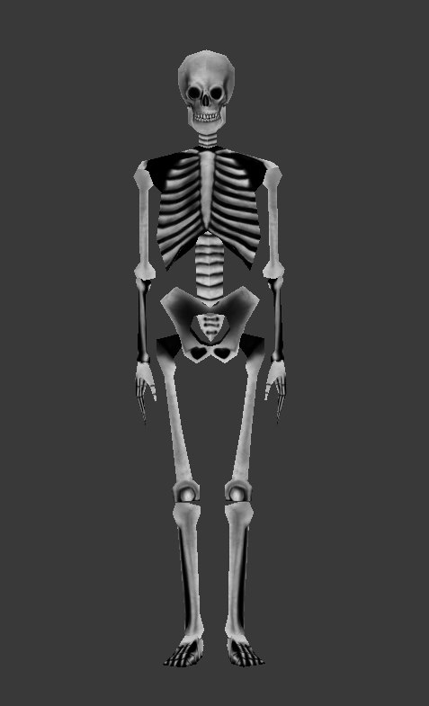 skeleton - 3d model, Skeleton