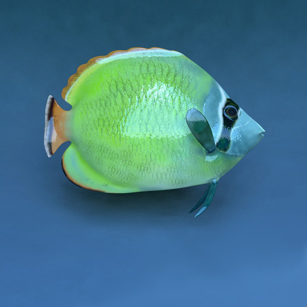 coral fish ma