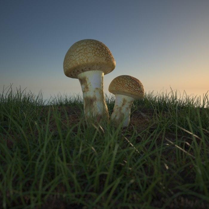 mushrooms undergrowth obj