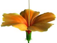 flor (flower)