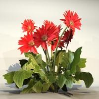 Flower_079