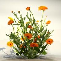 Flower_081(1)