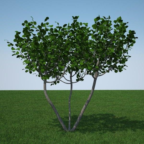 flowers tree fbx