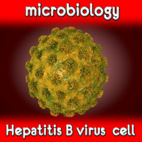 hepatitis b virus 3ds