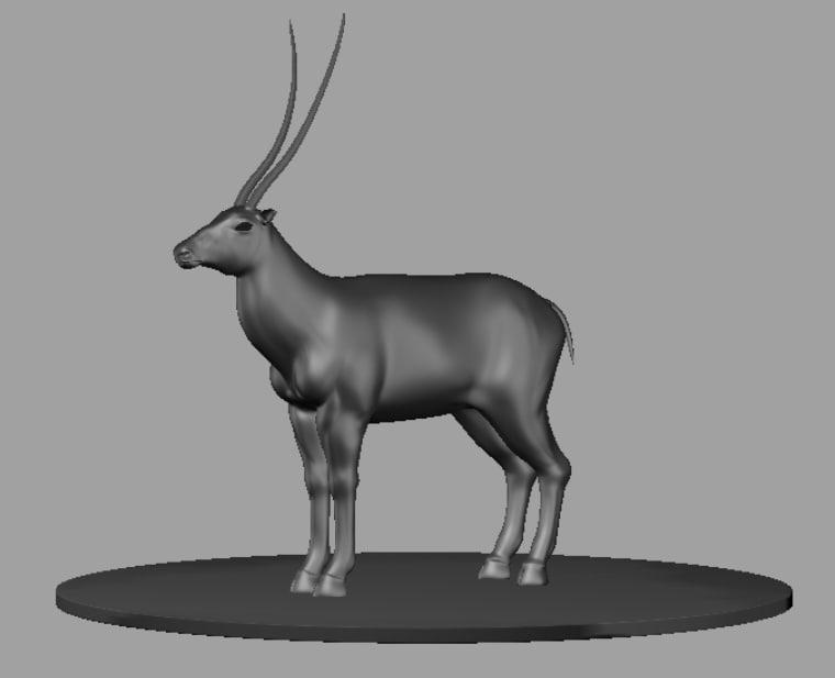 maya antelope