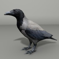 hooded crow 3ds