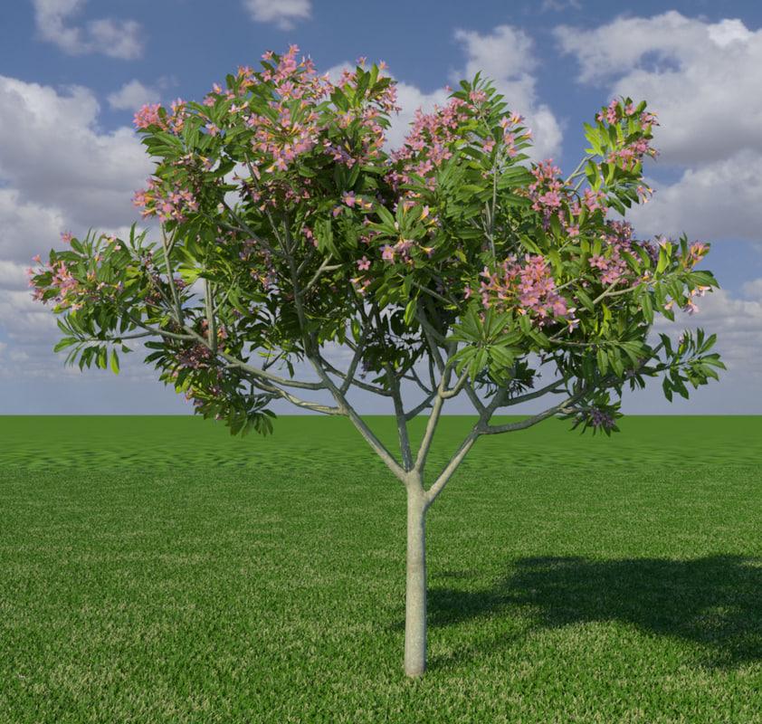 3d model frangipanni tree