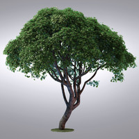 HI Realistic Series Tree - 106