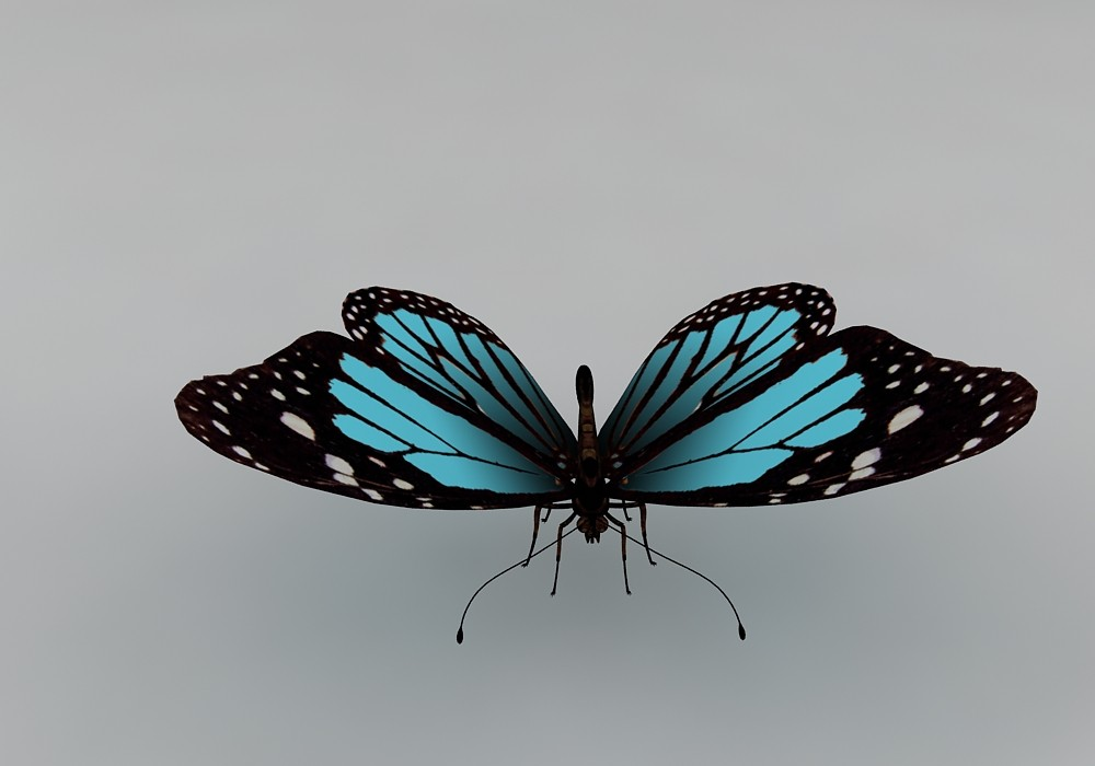 butterfly fly 3d max