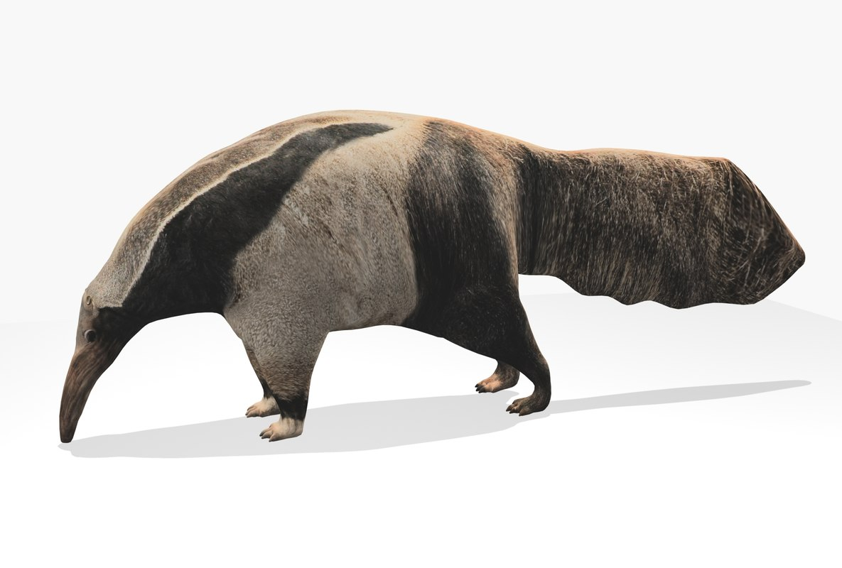 giant anteater max